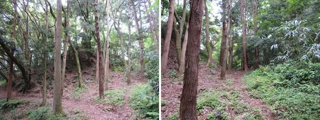 Photos: 大聖寺城(石川県加賀市)西の丸堀切