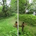Photos: 大聖寺城(石川県加賀市)分岐