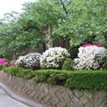 Photos: 19.05.14.丸岡城(福井県坂井市)