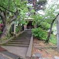 Photos: 丸岡城(福井県坂井市)霞城山八幡神社