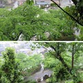 丸岡城(福井県坂井市)本丸西・水堀跡