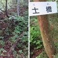 Photos: 戌山城(大野市)土橋