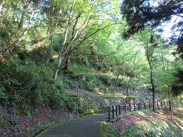 大野城(大野市)亀山公園南登り口