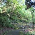 Photos: 大野城(大野市)亀山公園南登り口