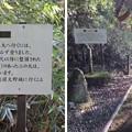 Photos: 大野城(大野市)百間坂