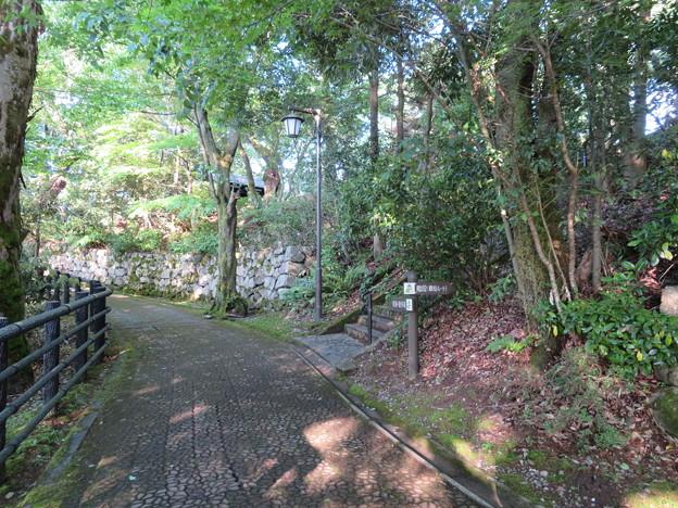 大野城/亀山公園南登り口(大野市)