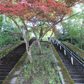 Photos: 大野城(大野市)本丸
