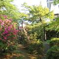 Photos: 大野城本丸(大野市)堀切?