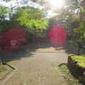 Photos: 大野城本丸/亀山公園休憩所(大野市)