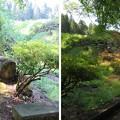 Photos: 一乗谷(福井市)朝倉館 中御殿跡