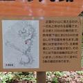 一乗谷城(福井市)一の丸