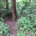 Photos: 一乗谷城(福井市)一の丸南堀切