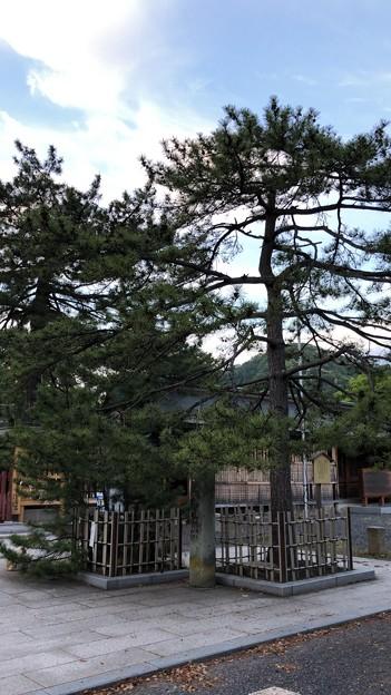 氣比神宮(敦賀市)旗掲松