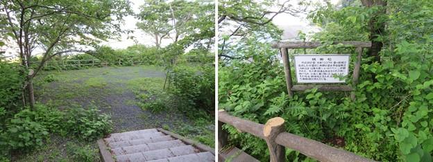 Photos: 金ヶ崎城 鴎ヶ崎(敦賀市)絹掛松
