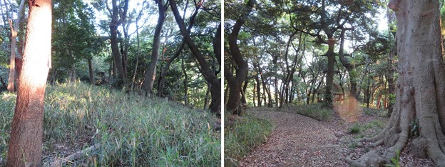 金ヶ崎城 郭(敦賀市)焼米石出土跡