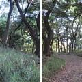 Photos: 金ヶ崎城 郭(敦賀市)焼米石出土跡