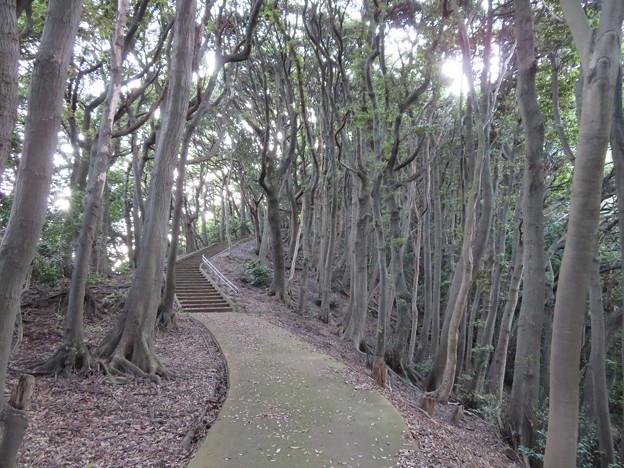 天筒山城(敦賀市)