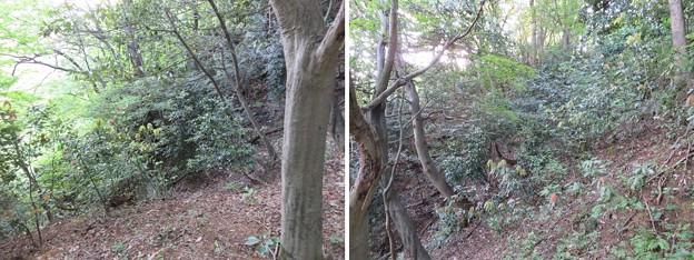 Photos: 天筒山城(敦賀市)堀切?