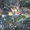 金ヶ崎城(敦賀市)郭 ・二の木戸跡