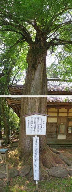 若狭姫神社(若狭彦神社下社。小浜市遠敷)乳神さま