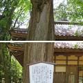 Photos: 若狭姫神社(若狭彦神社下社。小浜市遠敷)乳神さま