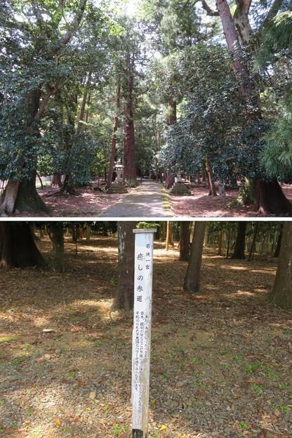 若狭彦神社(上社。小浜市竜前)癒しの参道