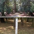Photos: 若狭彦神社(上社。小浜市竜前)癒しの参道