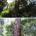 Photos: 若狭彦神社(上社。小浜市竜前)