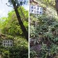 Photos: 黒井城(兵庫県丹波市)
