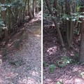黒井城(兵庫県丹波市)三段郭