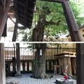 Photos: 浅草神社(台東区)被官稲荷社