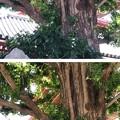 Photos: 浅草寺 正観世音菩薩碑(台東区)