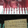 11.03.14.浅草寺(台東区)宝蔵門(仁王門)