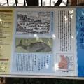 13.07.10.鯨塚(品川区東品川)