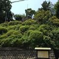 Photos: 13.07.10.品川神社(品川区北品川)富士塚