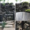 Photos: 品川神社(品川区北品川)かえる
