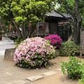 19.05.09.品川神社(品川区北品川)