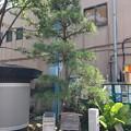 Photos: 13.07.10.品川北本宿/品海公園(品川区北品川)