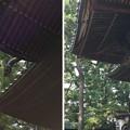 Photos: 13.07.10.荏原神社(品川区北品川2丁目)