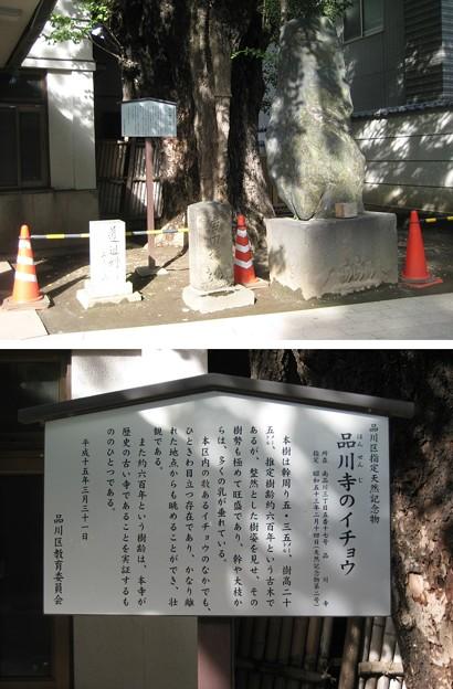 10.11.02.品川寺(南品川)庚申塔 ・銀杏