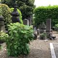 Photos: 海晏寺(南品川)