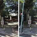 Photos: 鬼子母神西参道(豊島区雑司ヶ谷)