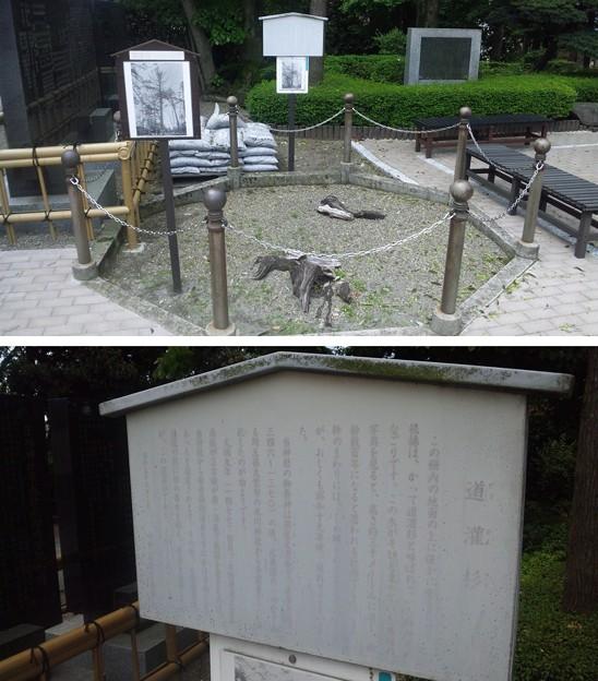 沼袋氷川神社(中野区)道灌杉