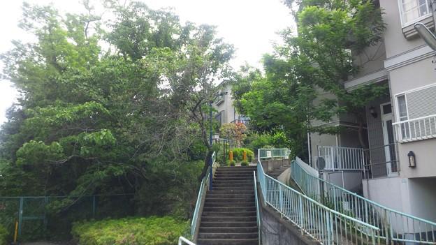 Photos: 江古田公園(中野区松が丘)江古田原古戦場跡