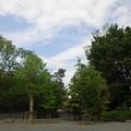 江古田公園(中野区松が丘)河川東側