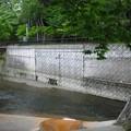 江古田公園(中野区松が丘)江古田大橋より南