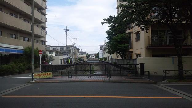 江古田公園(中野区松が丘)江古田大橋上より北
