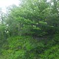 Photos: 12.05.16.江古田公園(中野区松が丘)江古田原古戦場跡