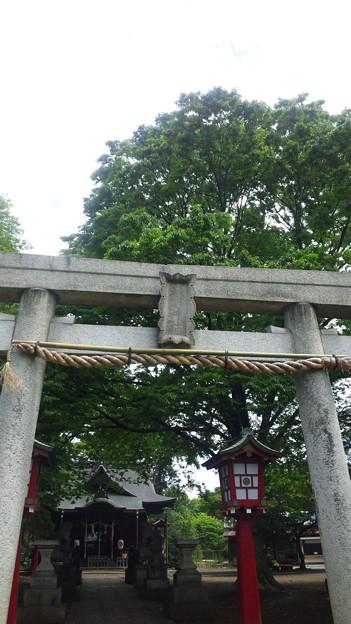 12.05.16.江古田氷川神社(中野区江古田)