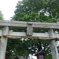 Photos: 12.05.16.江古田氷川神社(中野区江古田)